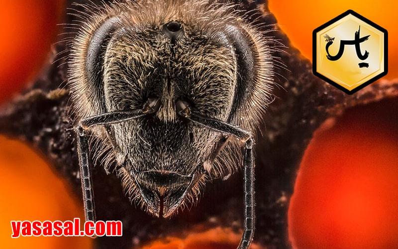 خرید وفروش داروهای کنه زنبور عسل