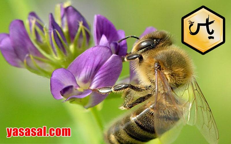 خرید انواع دستگاه زهرگیر زنبور عسل