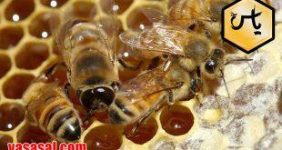 خرید و فروش اینترنتی عسل داروها