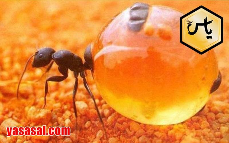 عسل طبیعی را چگونه بشناسیم؟