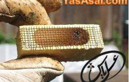 قفسه ملکه زنبورداری
