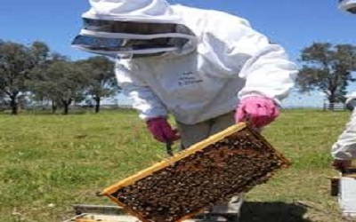 خریدار لباس زنبورداری