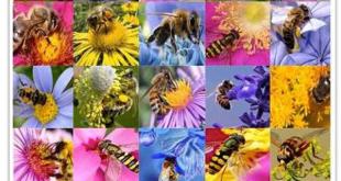 عسل طبیعی چندگیاه