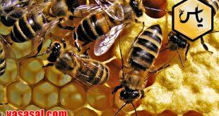 قیمت فراوردهای زنبور عسل