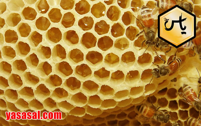انواع موم عسل