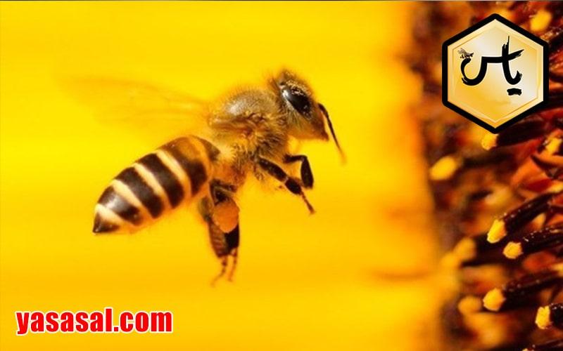 داروهای زنبور