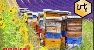 قیمت عسل چندگیاه