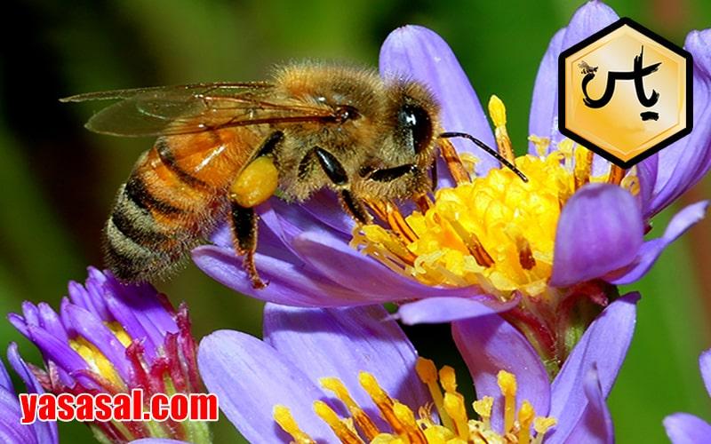 انواع داروهای زنبور عسل