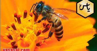 خرید گرده گل عسل