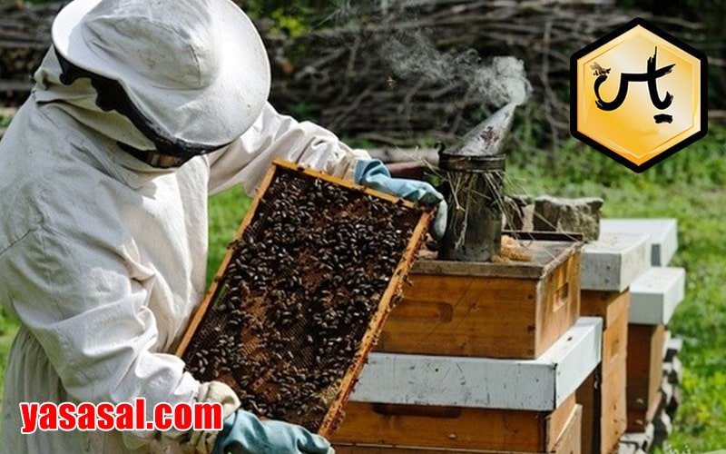 ویزگی های زنبور داری قفقازی