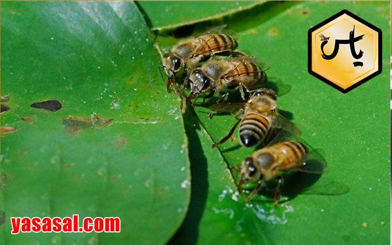 مکمل های غذایی زنبور عسل