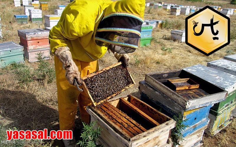 دانستنی های زنبور عسل