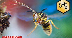 صادرات انواع عسل