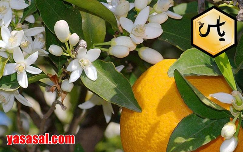 عسل بهارنارنج طبیعی